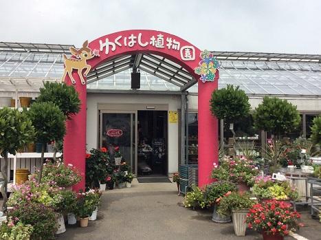 植物園 2015-7-5-1