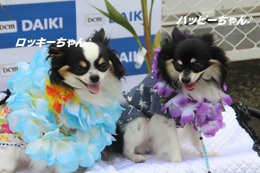 ダイキ1 2015-7-12-7