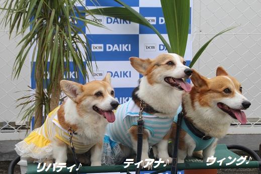 ダイキ1 2015-7-12-8