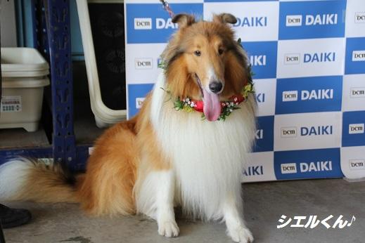 ダイキ1 2015-8-2-3