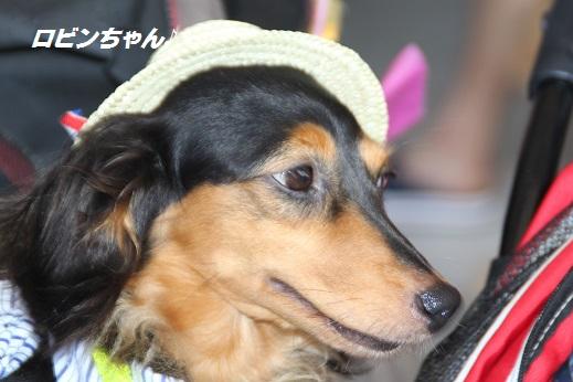 ダイキ2 2015-8-2-2