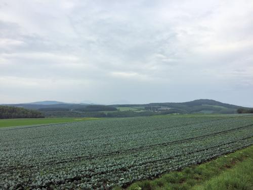 Farm 2015/7/21 3