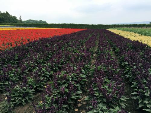 Flower garden 2015/8/4 1