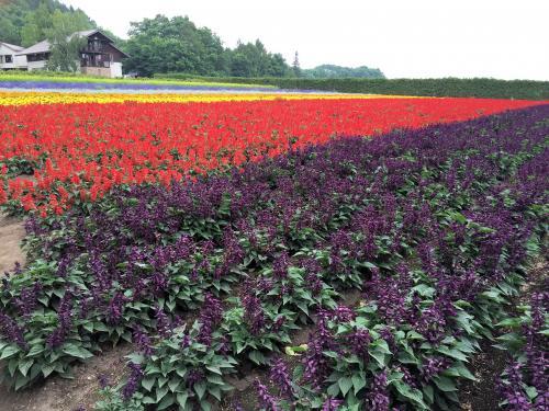 Flower garden 2015/8/4 2