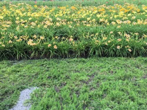 Flower garden 2015/8/4 3