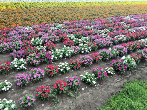 Flower garden 2015/8/4 4