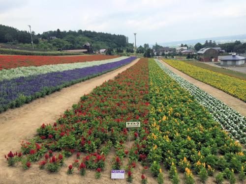 Flower garden 2015/8/4 6