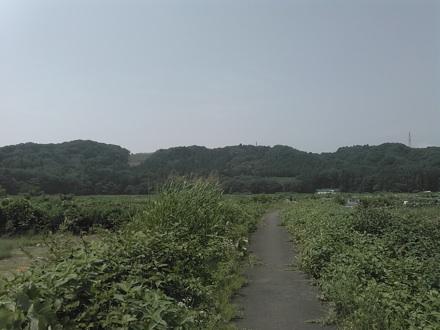20150712_akigawa.jpg