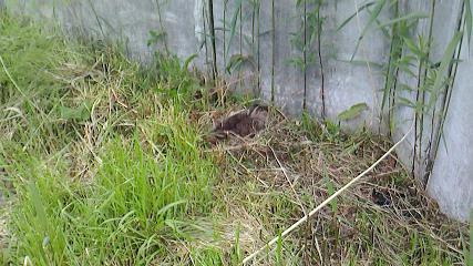 カモと抱卵NEC_0162