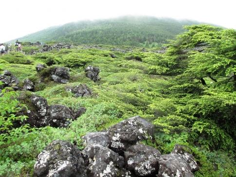 北アルプス(北横岳~天狗岳) 028-001