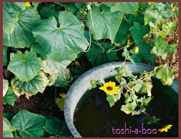 blognatsubatake.jpg