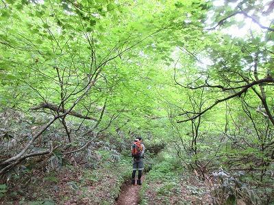 斜里岳旧道登山道1