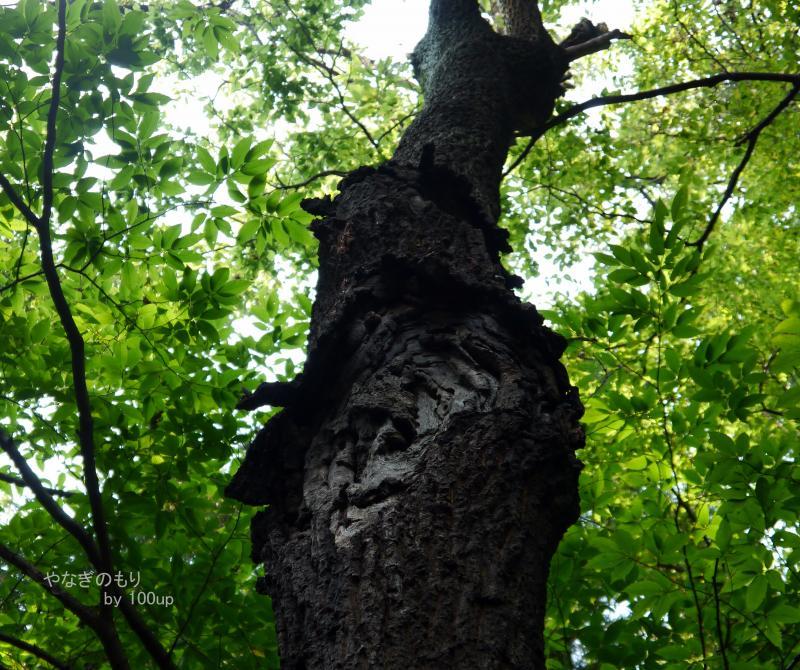 2015年7月12日撮影 雑木林散策1