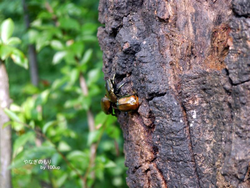 2015年7月12日撮影 雑木林散策4