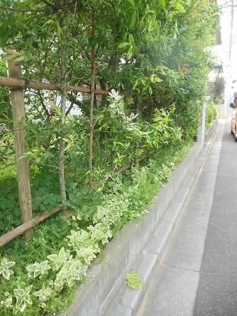 20150718kitaro7.jpg