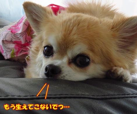 sx700IMG_5947.jpg