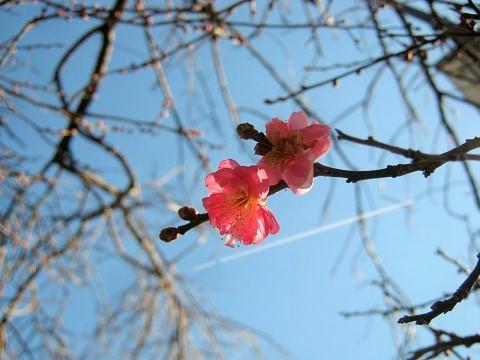 oomiyadaini141223-106.jpg