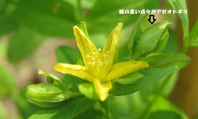 tazimagahara150802-103.jpg
