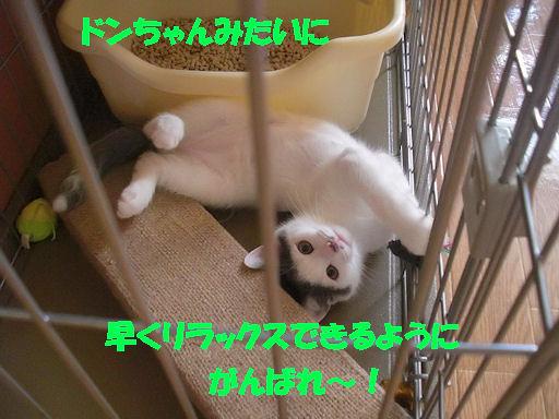 CIMG9147.jpg