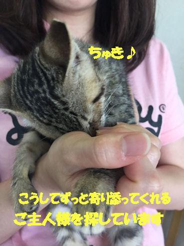 IMG_0581.jpg