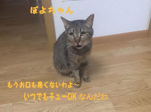 image4_201507201129287f8.jpg