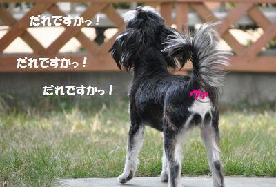 DSC_0976 (2)