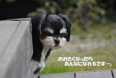DSC_10211.jpg