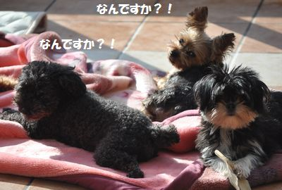 DSC_1050_20141231115045c0b.jpg