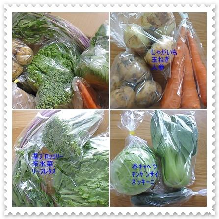 野菜さんたち
