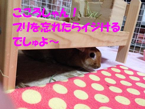 IMG_8828.いじけ虫