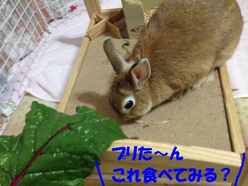 IMG_9739.葉っぱ