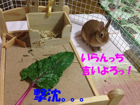 IMG_9737.葉っぱ