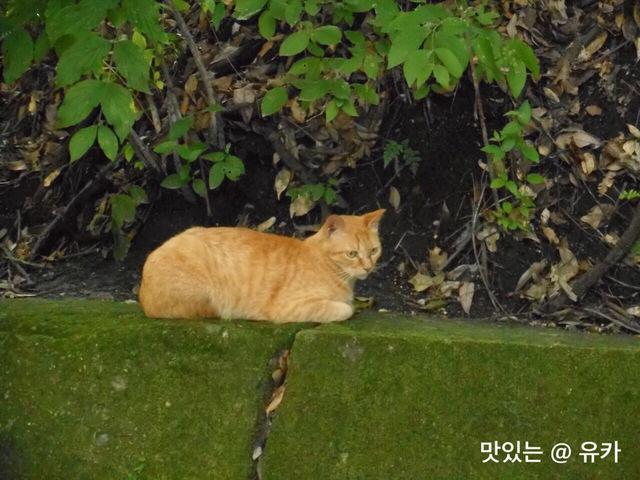 鹿児島のネコ
