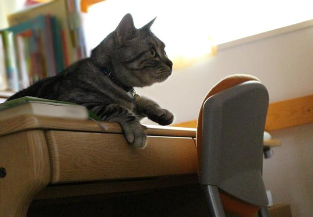 猫の手要りますか?