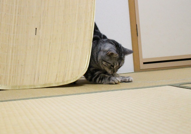 かくれんぼ猫