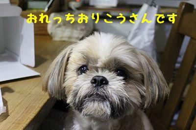 ぽん太9歳 (7)