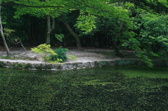 唐招提寺05