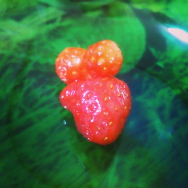 ネズミイチゴ