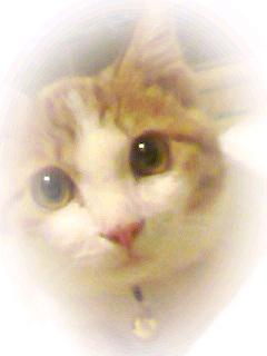 ブログNo.307(お蔵入り猫画像発掘!第三弾)1