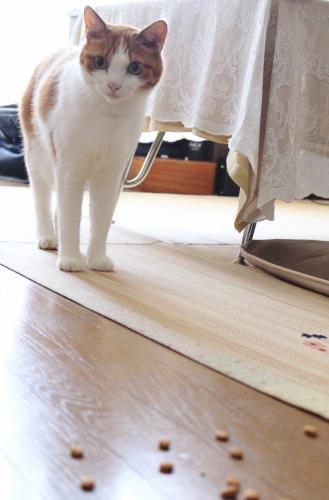 No.324(カリカリ食べ放題なのに。)4