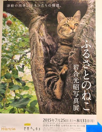 No.322(岩合さん写真展&頭乗せにゃんこ&擬人化)1