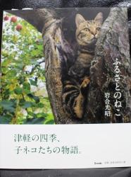 No.322(岩合さん写真展&頭乗せにゃんこ&擬人化)8