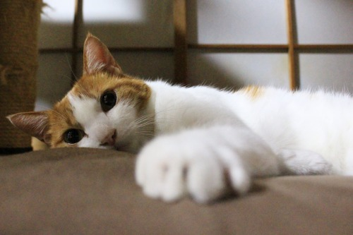 ブログNo.323(ゆるだる~猫じゃ遊び)1