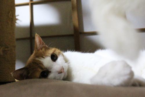 ブログNo.323(ゆるだる~猫じゃ遊び)2