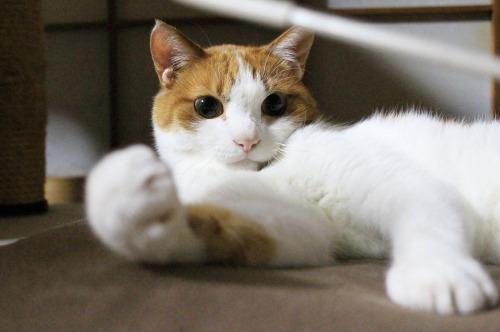ブログNo.323(ゆるだる~猫じゃ遊び)4
