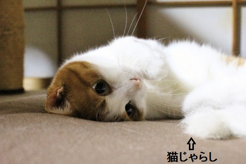 ブログNo.323(ゆるだる~猫じゃ遊び)5