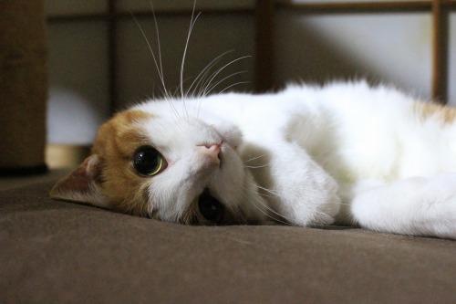 ブログNo.323(ゆるだる~猫じゃ遊び)7