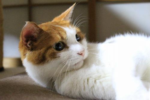 ブログNo.323(ゆるだる~猫じゃ遊び)8