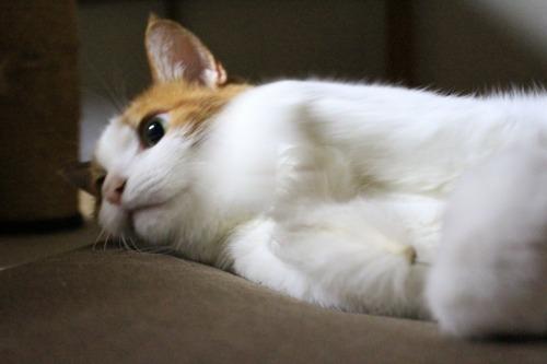 ブログNo.323(ゆるだる~猫じゃ遊び)9