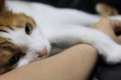 ブログNo.326(お出掛け前、お出掛け後の猫)12